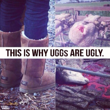 This-is-Why-Uggs-are-Ugly1.jpg
