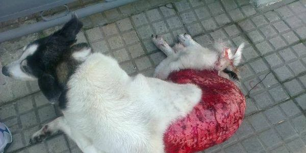 Punish Man That Skinned This Dog Alive and Published Photo ... |Being Skinned